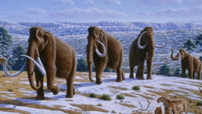 drawing of wooly mammoths walking on a ridge
